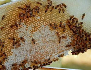 A méz hatékony felhasználása